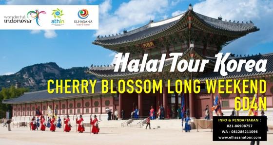 Korea Cherry Blossom Baner