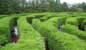 Maze Land